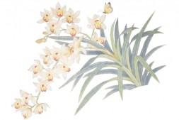被打翻的一盆兰花